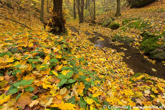 """Das Laub ist ab. Jetzt bedeckt es den ganzen Waldboden, tonnenweise. Und wer """"räumt"""" es weg und wohin? - Viele kleine Helfer!"""