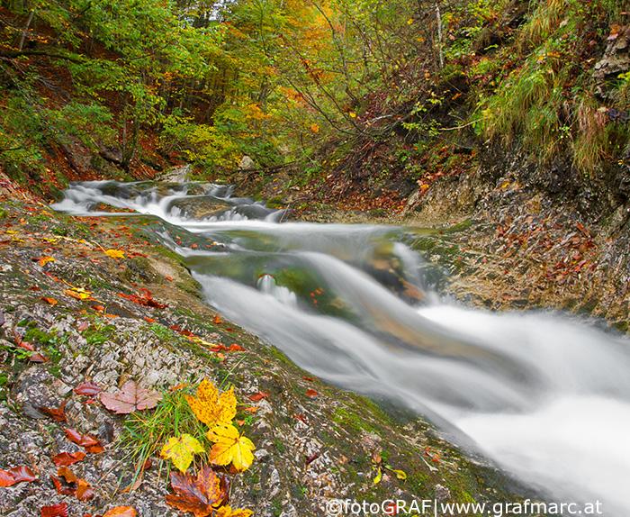 Durch den Nationalpark Kalkalpen zieht sich ein bis heute nahezu unverbaut gebliebenes, 200 Kilometer langes Fließgewässer-Netzwerk.