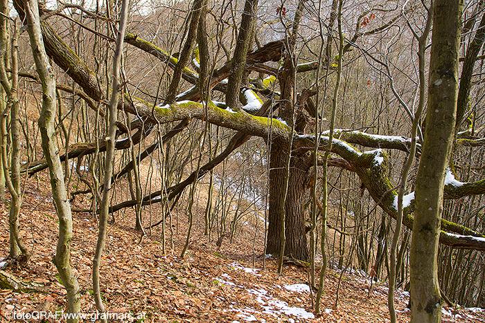 Zum meteorologischen Frühlingsbeginn am 1. März kann vielerorts auch noch Schnee liegen.