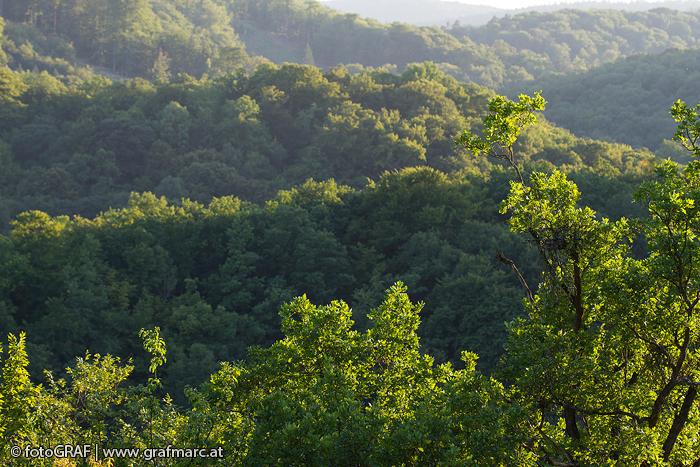 In den letzten zehn Jahren ging der Anteil der Nadelbäume deutlich zurück. Der Thayatal-Wald entwicklet