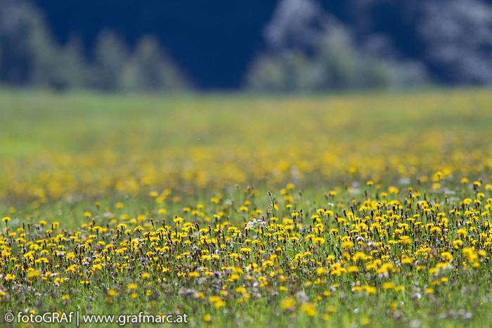 Rund 60 Hektar Wiesenflächen finden sich im Nationalpark Thayatal. Ein faszinierender Lebensraum in Miniaturausgabe.
