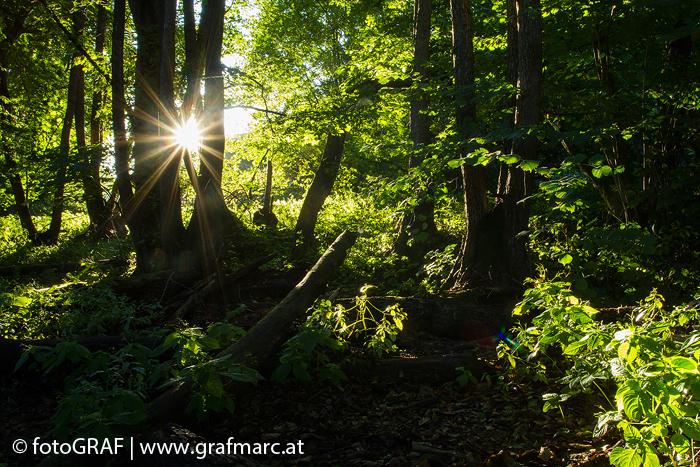 Die Verdunstung von Wasser im Wald forciert die Wolkenbildung. Auf diese Weise wird gelangt nicht die gesamte Sonnenergie auf den Boden.