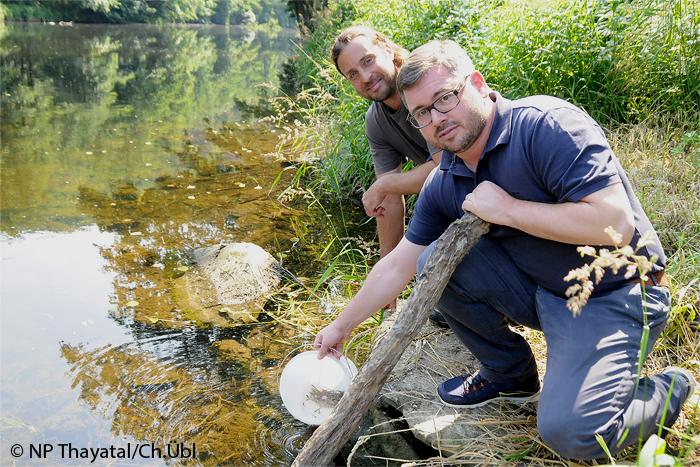Fischzüchter Michael Gallowitsch und Nationalpark Direktor Ludwig Schleritzko beim Besetzen der Thaya mit nachgezüchteten Bachforellen.