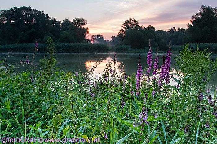 Ausgedehnte Auwälder, Wasserflächen und Wiesenlandschaften machen den NP Donau-Auen zu einem wahren Natur-Eldorado.
